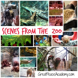 Scenes from Cleveland Zoo